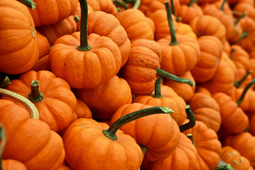 7 Low Carb Pumpkin Recipes